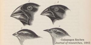 Darwin Manuscripts Project