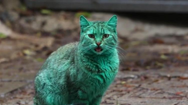 Green Cat of Varna