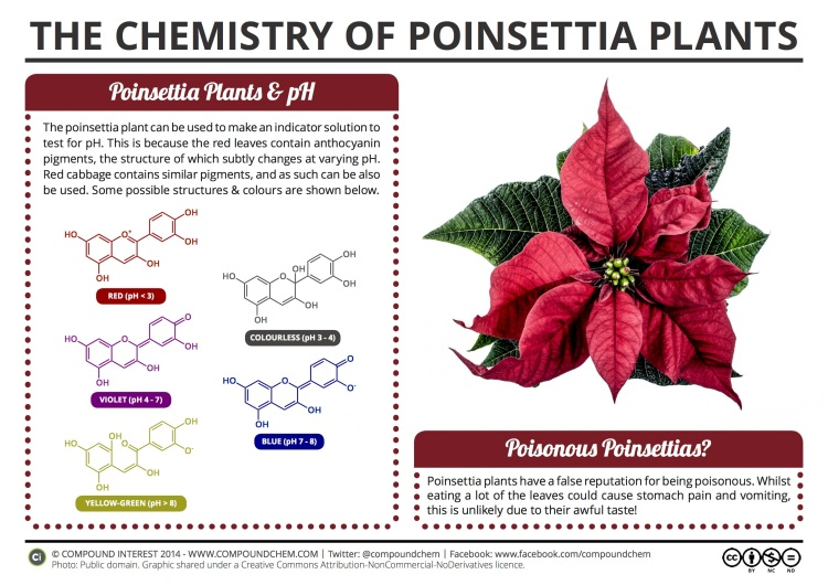 A Festive Explanation of the Chemistry of Poinsettia Plants