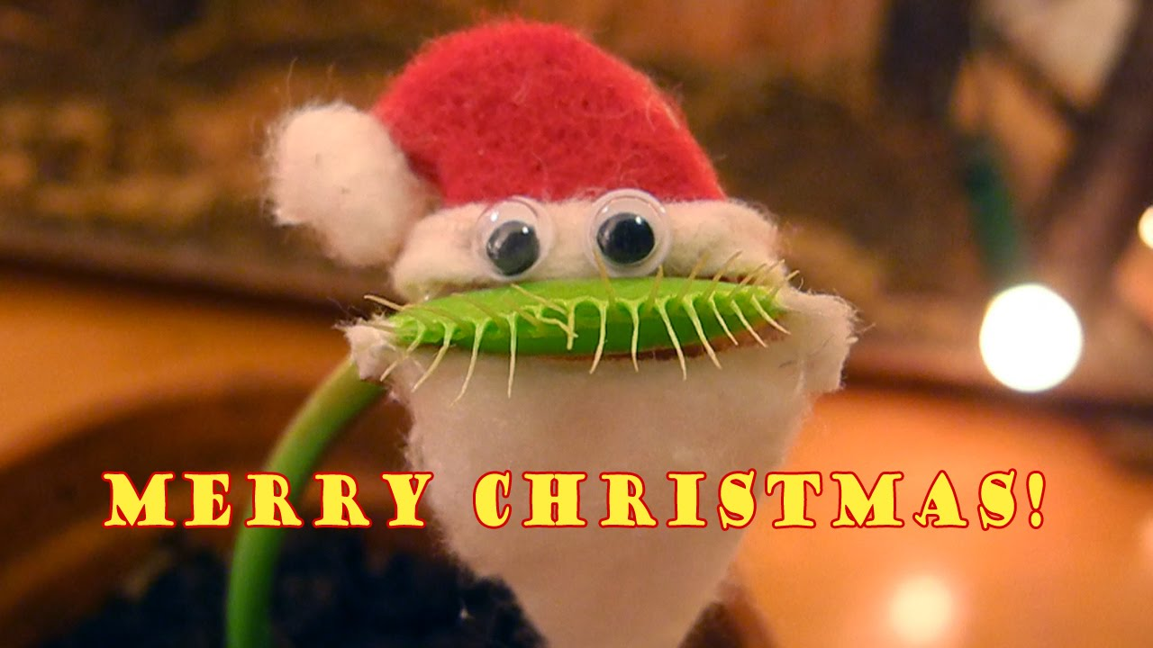 Charlie the Venus Flytrap Dons a Santa Hat, Googly Eyes, and a Beard to Celebrate Christmas