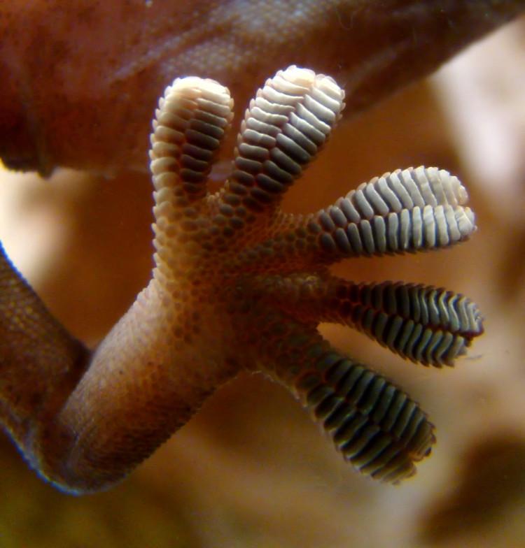geckofeet