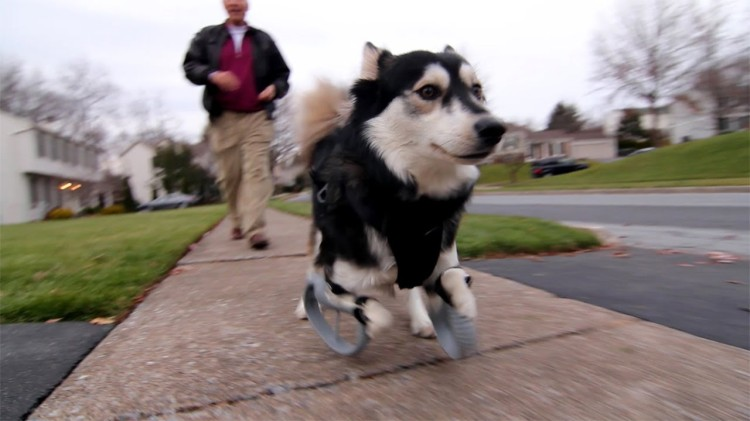 Rescue Dog With Deformed Front Legs Is Now Able to Run With the Help of 3D-Printed Prosthetic Paws