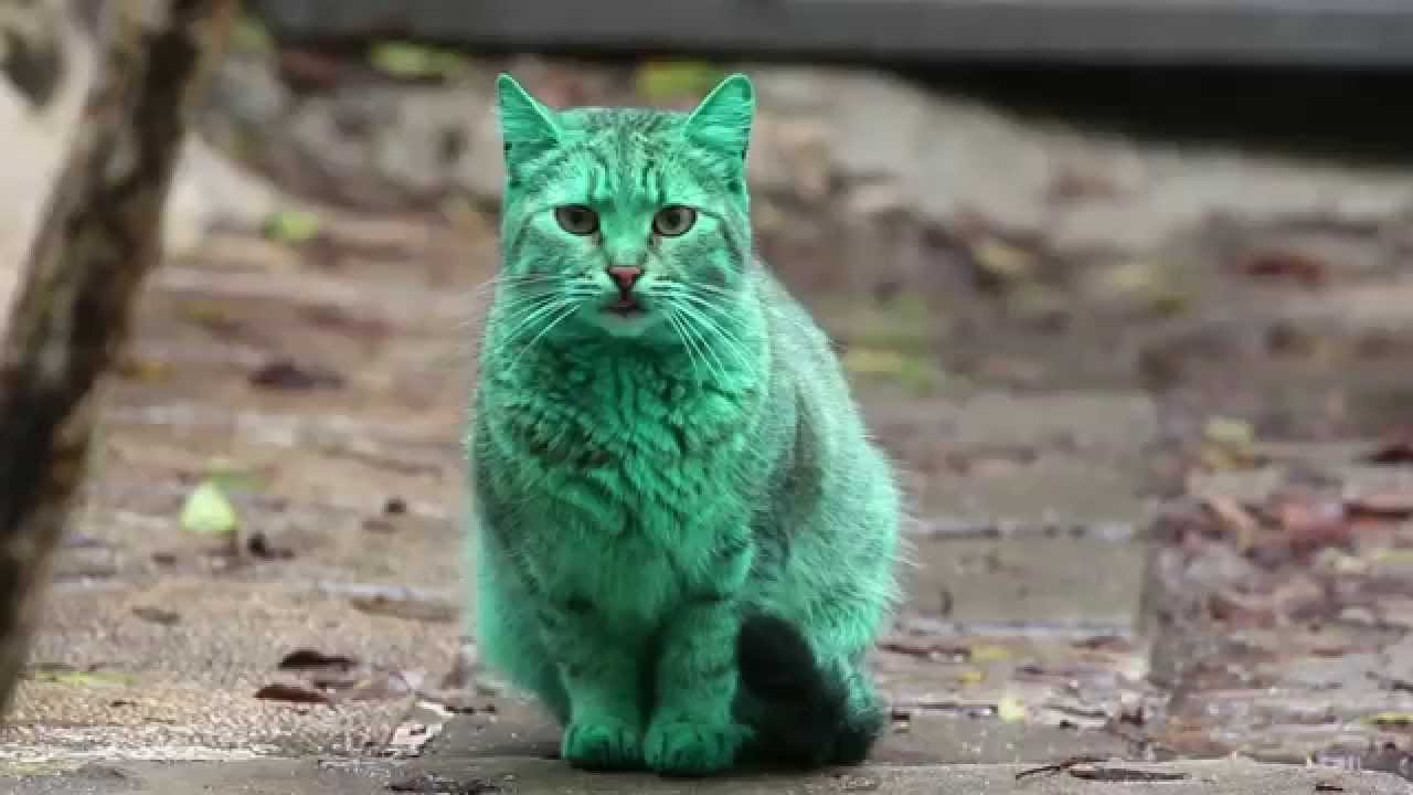 Tabby Cat With a Surprisingly Green Colored Coat Roams the Streets of Varna, Bulgaria