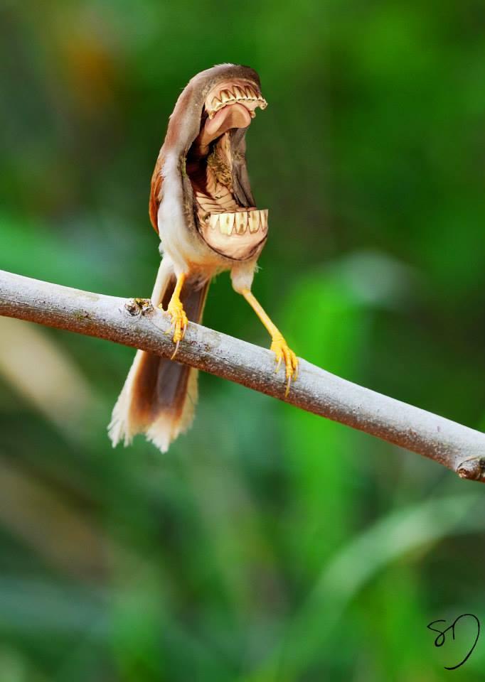 Big Mouth Birds by Sarah DeRemer