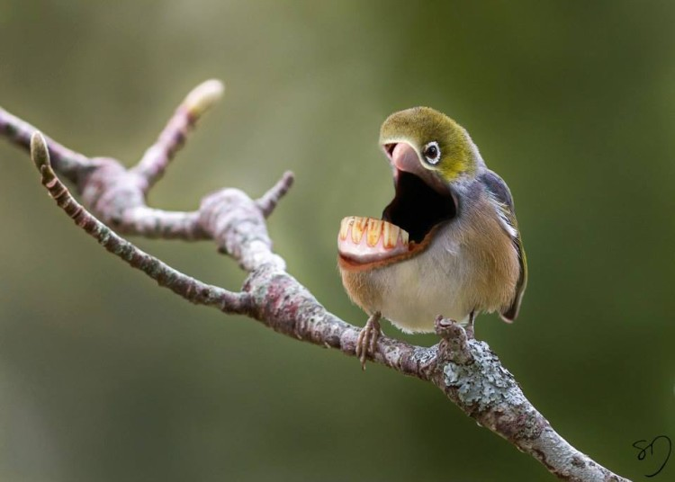 Big Mouth Birds by Sarah DeRemer