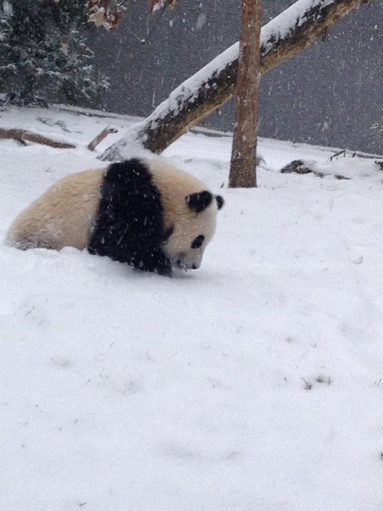 Bao Bao Snow