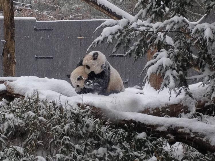 Bao Bao and Mom