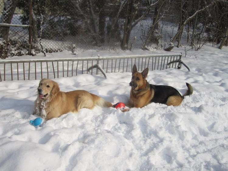 Bentley and Loki