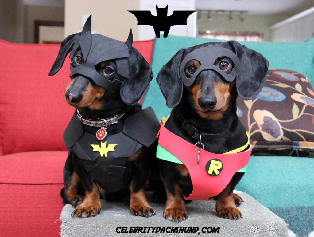 Crusoe the Celebrity Dachshund and His Brother Oakley Catch a Burglar While Dressed as 'Batdog and Robin'