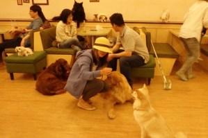 Dog Cafe in Korea