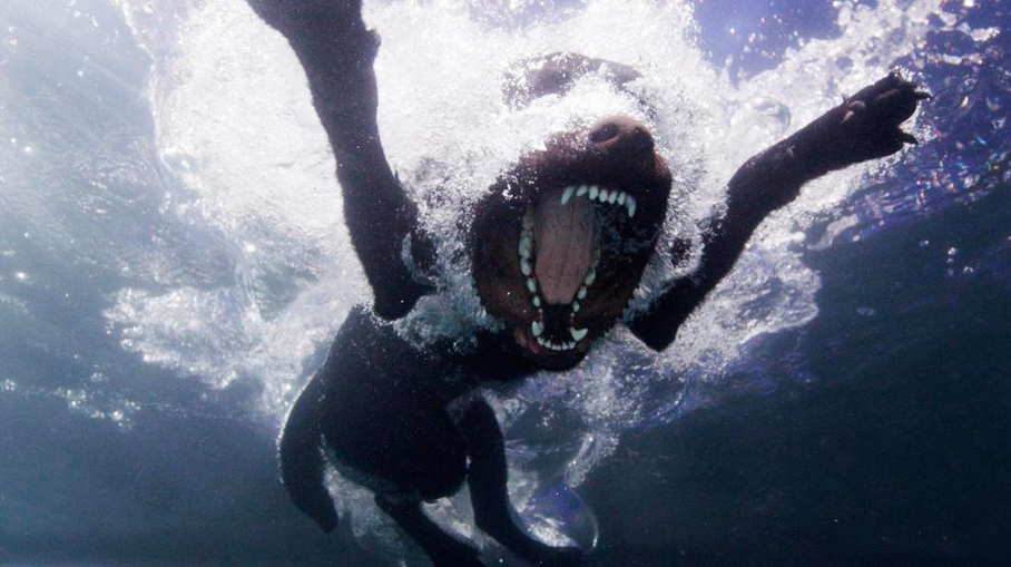'Underwater Diving Dogs', Slow-Motion Footage of Swimming Canines Doing the Doggy Paddle