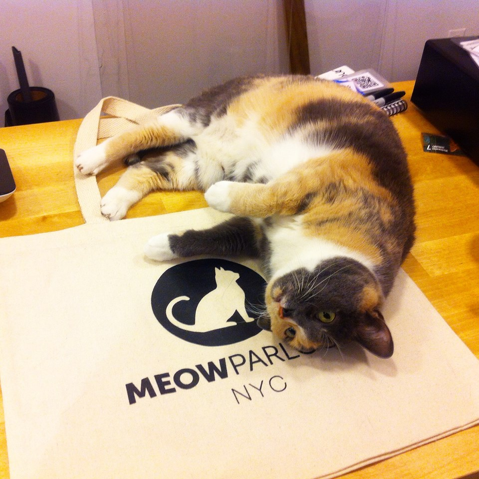 Meow Parlour, New York City's First Permanent Cat Café Is Open For Business on Hester Street