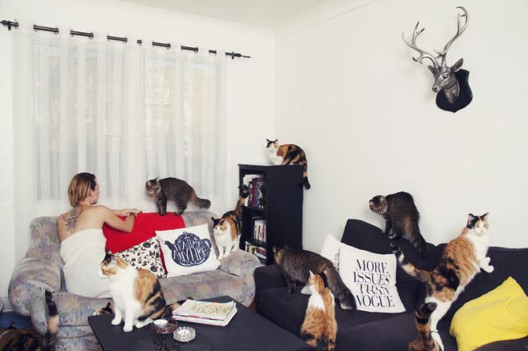 Kat Kitties