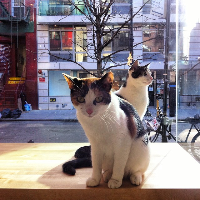 Kitties in Window