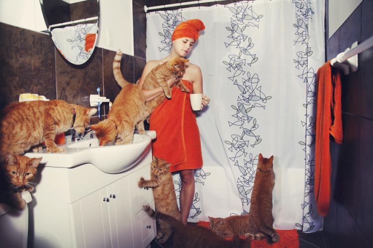 Maude Henri Orange Tabby