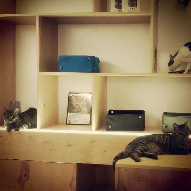 Meow Parlour Shelves