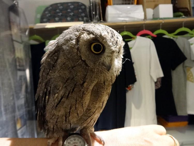 Owl Cafe Owl