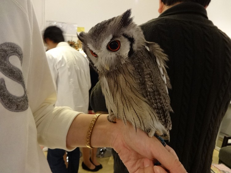 Owl on Arm
