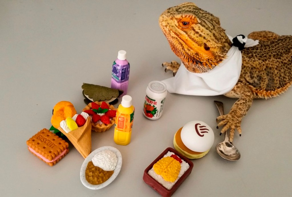 Pringle, The Camera-Loving Bearded Dragon Lizard Who Dresses Up in Costumes and Poses With Tiny Props
