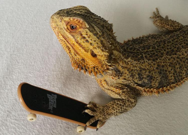 Pringle with Skateboard