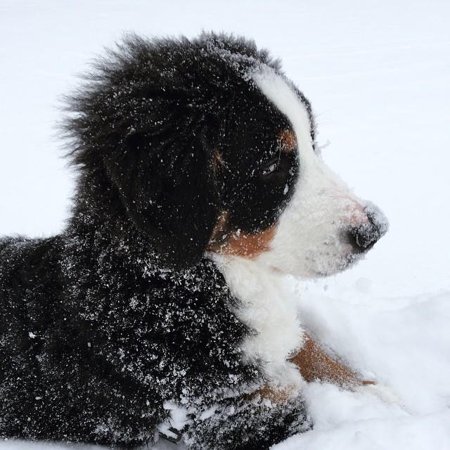 Quinn in Snow