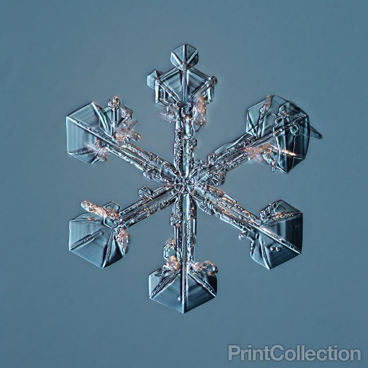 Snowflake Photos by Douglas Levere