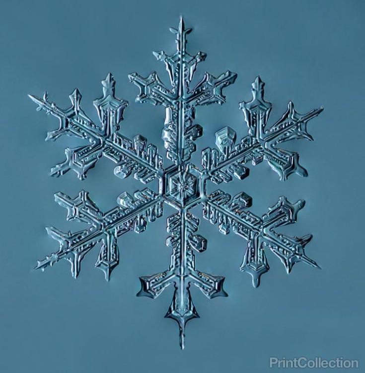 Snowflake Photos by Douglas Levere
