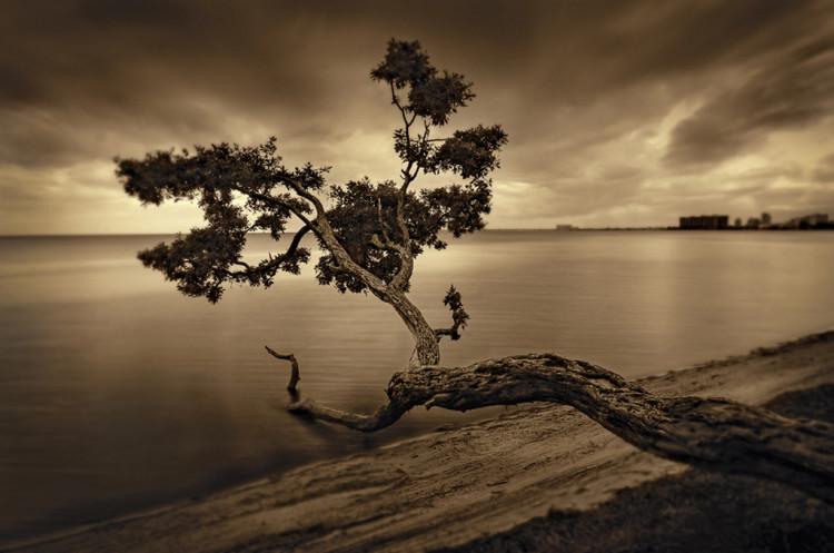 Tree in Key  Biscayne