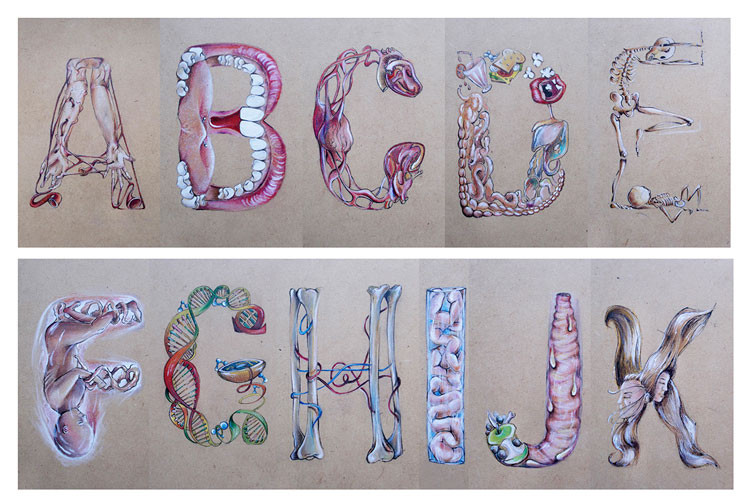An Illustrated Alphabet Based on Human Anatomy