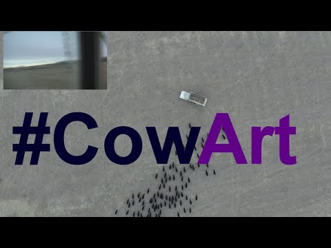 Overhead Drone Video of a Farmer Herding Cattle Into Simple 'Cow Art' With a Truck
