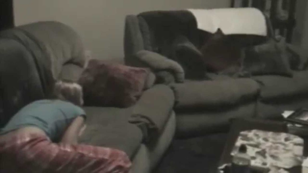 Playful Kitten Leaps Over Two Armrests and Bounces Off of the Sofa in an Adorable Game of 'Hide-and-Seek'