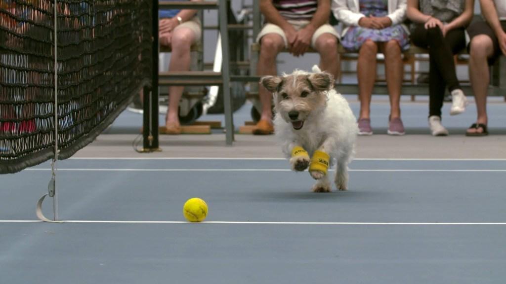 Tennis Pros Venus Williams and Svetlana Kuznetsova Play While 'Ball Dogs' Fetch and Retrieve Stray Game Balls
