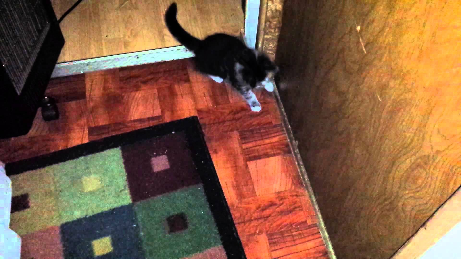 Tiny Kitten Attacks the Paw of an Unseen Grunting Monster on the Other Side of a Door