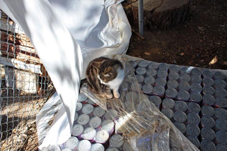 Cat on Food Supply