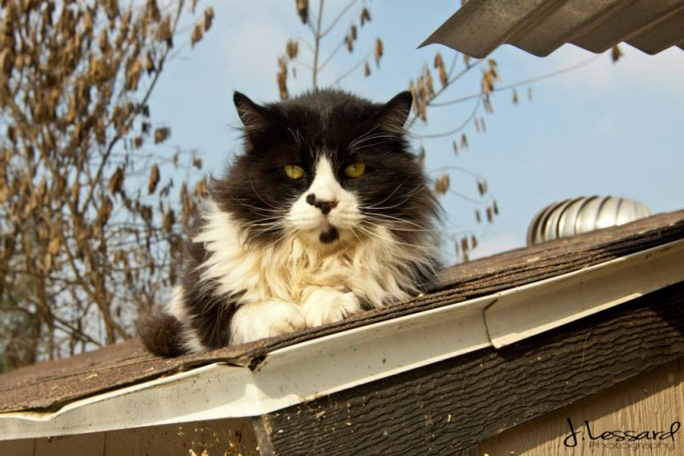 Cat on Roof at Cat House