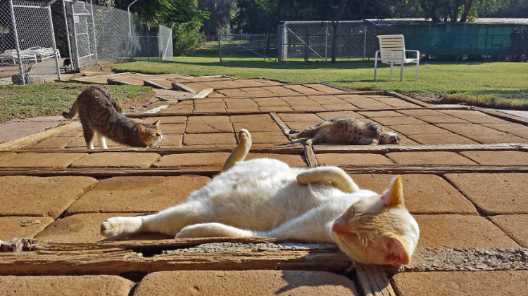 Cats Laying Around at Cat House on the Kings