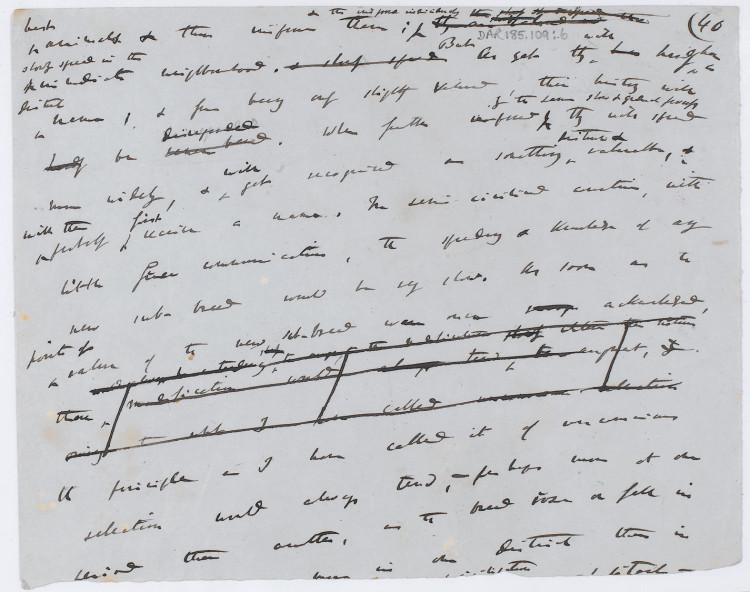Darwin manuscript front 1