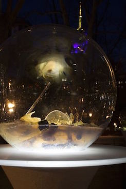 Gazing Globes at Night
