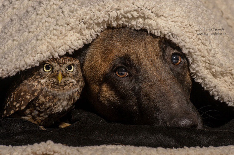 Ingo and Else, A Series of Photos That Capture the Unique Bond Between a Dog and a Tiny Owl
