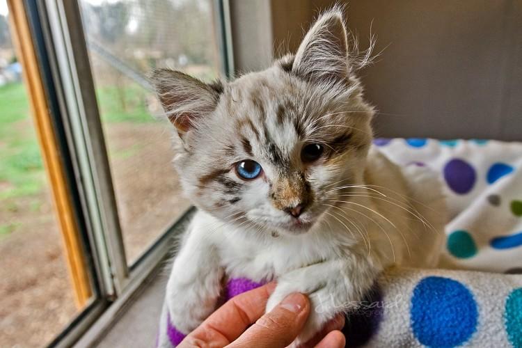 Kitten - Cat House on the Kings