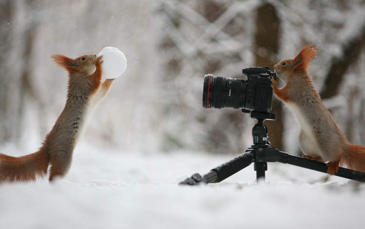 Russian Photographer Captures Two Squirrels Playfully Interacting With Their Surroundings