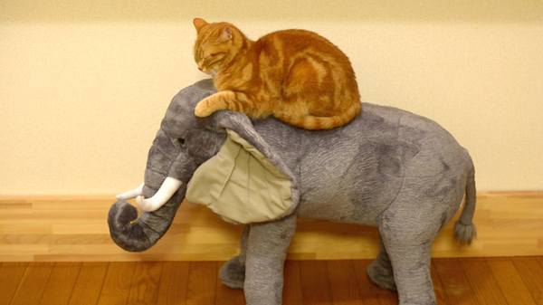 Sleepy Kitty on Elephant