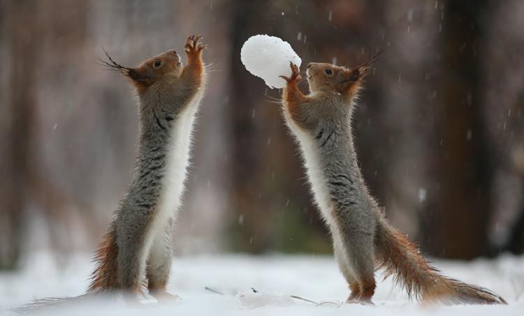 Snowball Share
