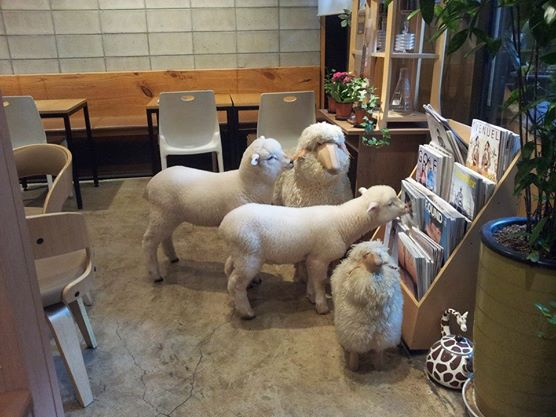TN Sheep with Sheep Toys