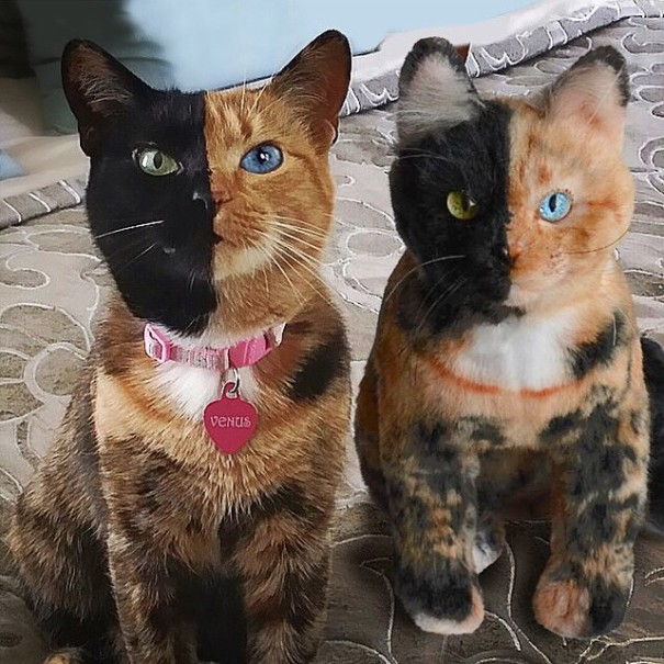 'Cuddle Clones', A Company that Uses Uploaded Images to Make Plush Replicas of People's Pets