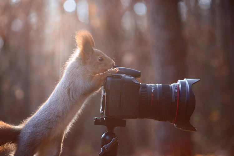 Works as a Photographer for Nuts