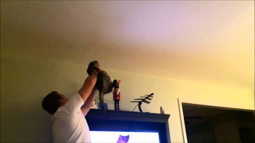 A Determined Cat and His Equally Determined Human Combine Efforts to Catch a Bug on the Wall