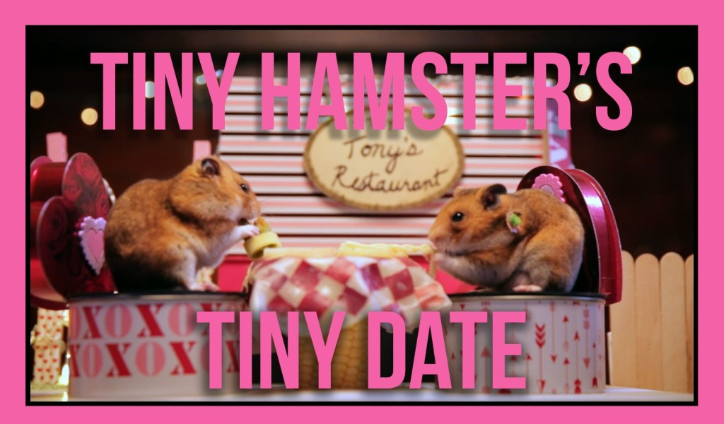 A Tiny Hamster Goes on a Romantic Date With His Tiny Girlfriend and Enjoys a Tiny Spaghetti Meal