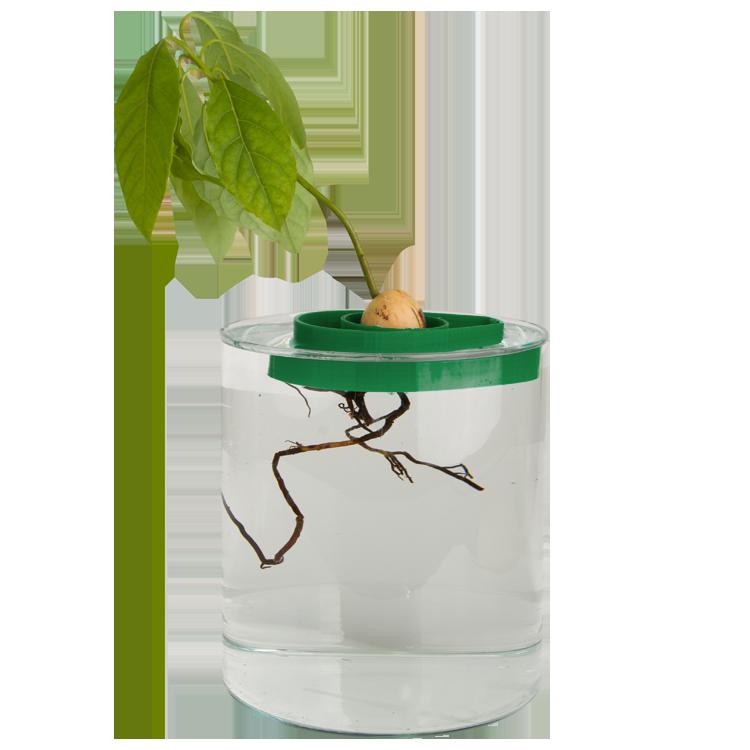 AvoSeedo with plant