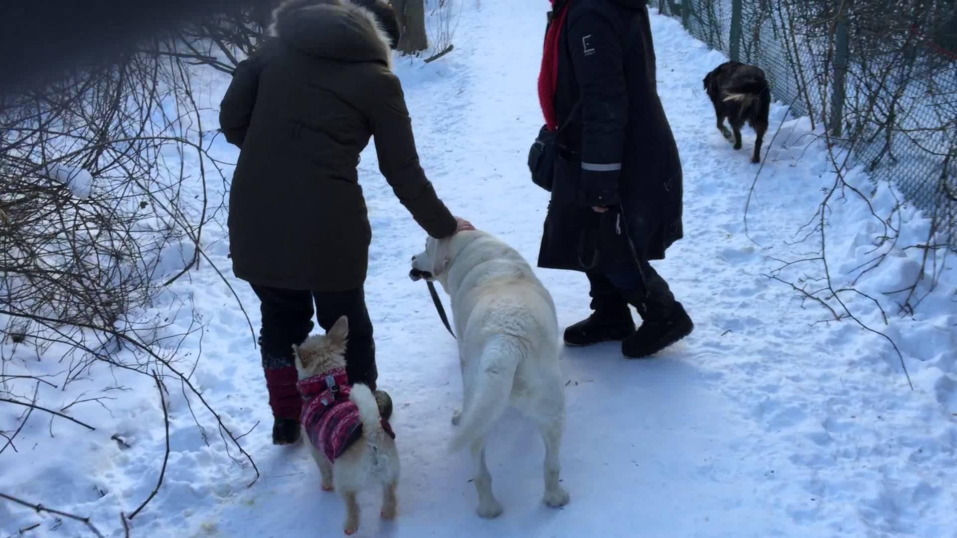 older dog sweetly walks a little dachshund on a leash down a snowy trail